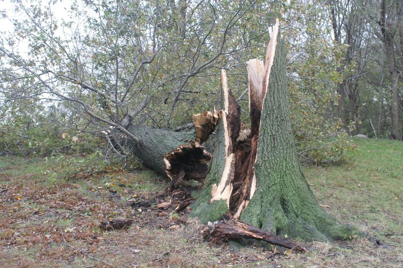 Downed-tree-2