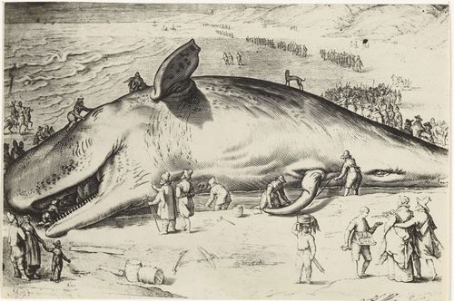 essay on whale fish