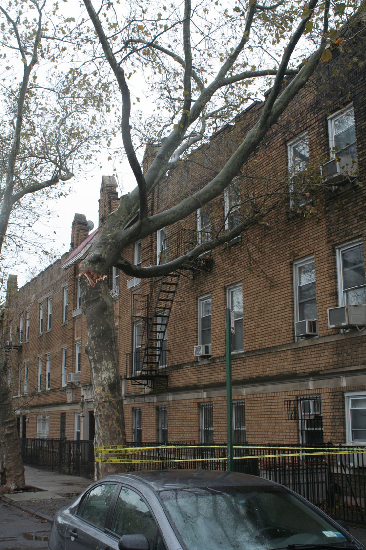 Windsor-terrace-tree
