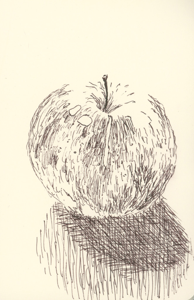 Winesap (drawing by Caleb Crain)