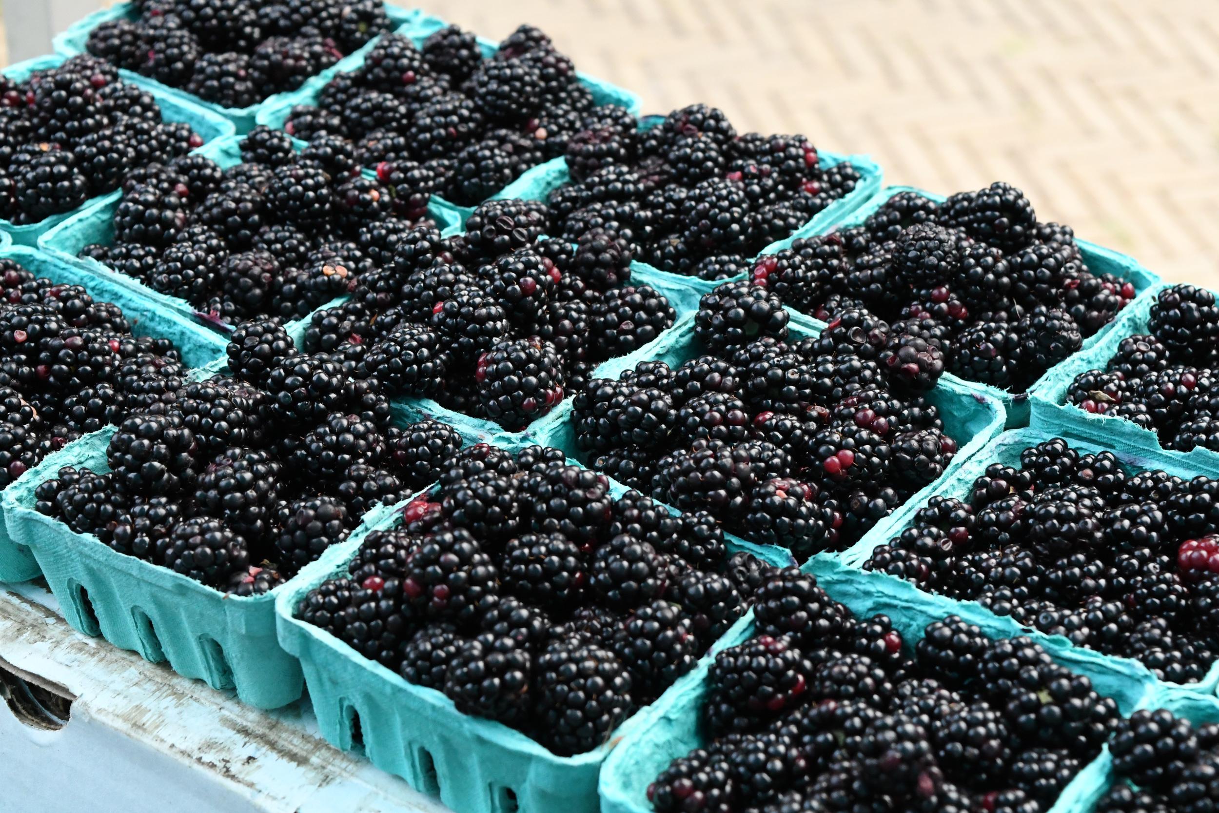 blackberries, Bartel Pritchard Square