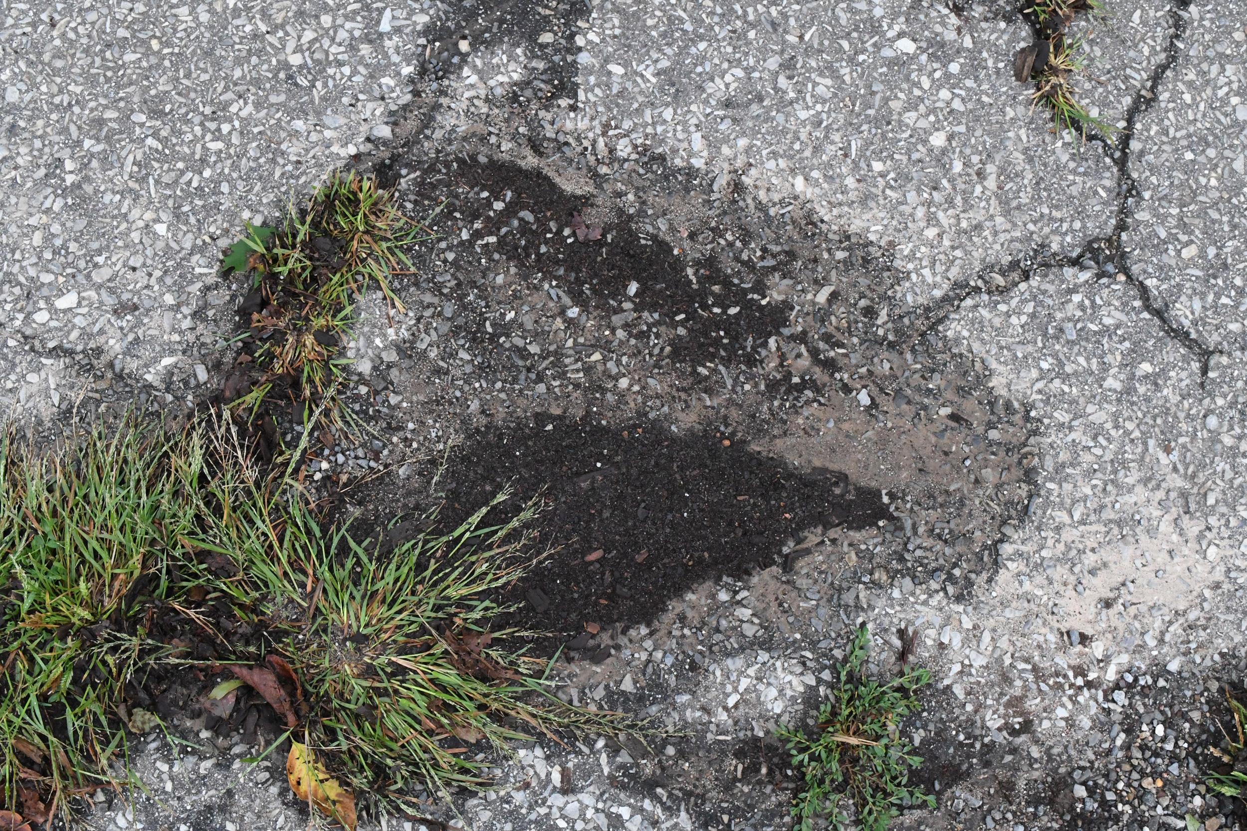 Debris left after rainwater, Prospect Park