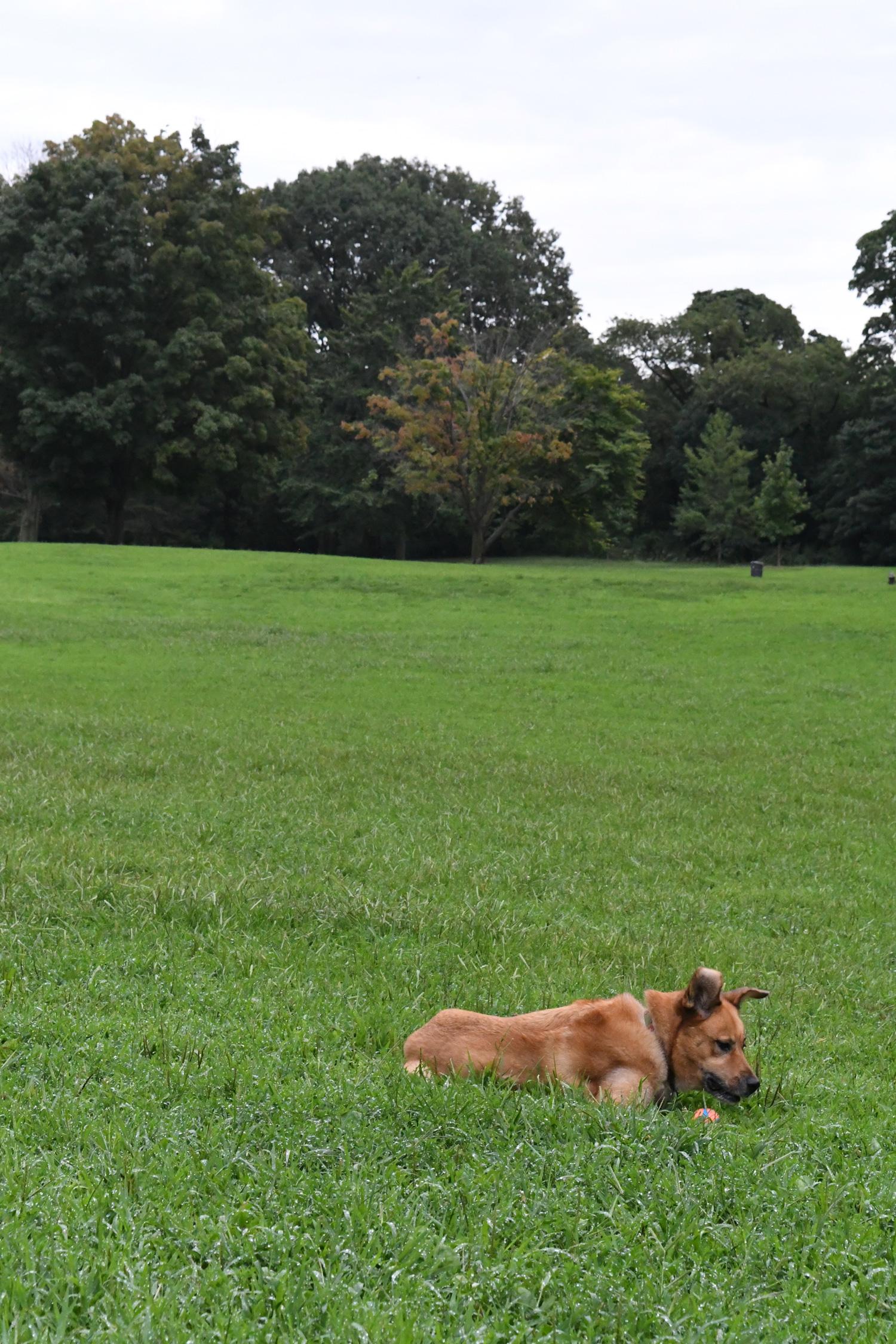 Toby couchant, Prospect Park