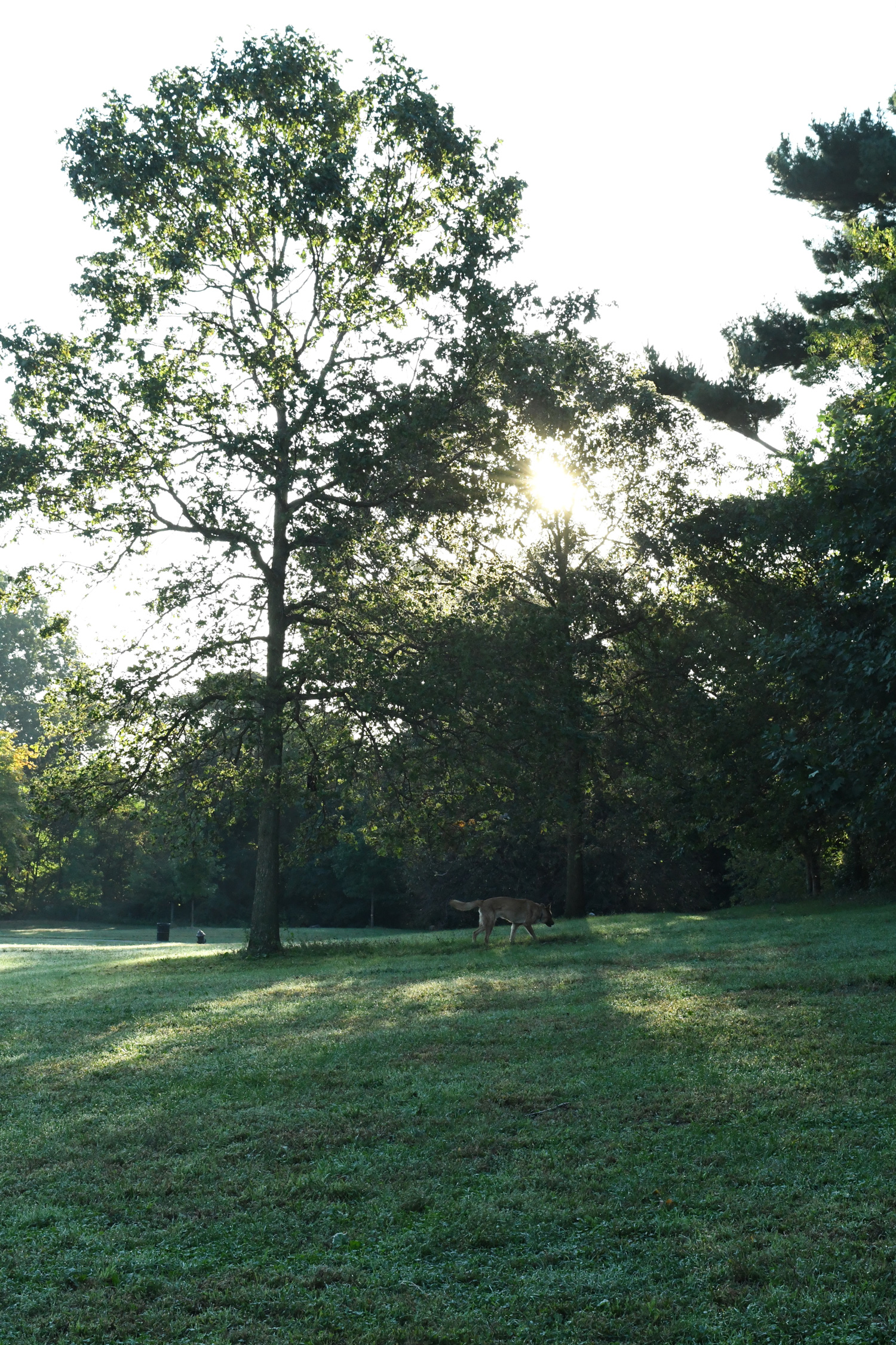 Morning walk, Prospect Park