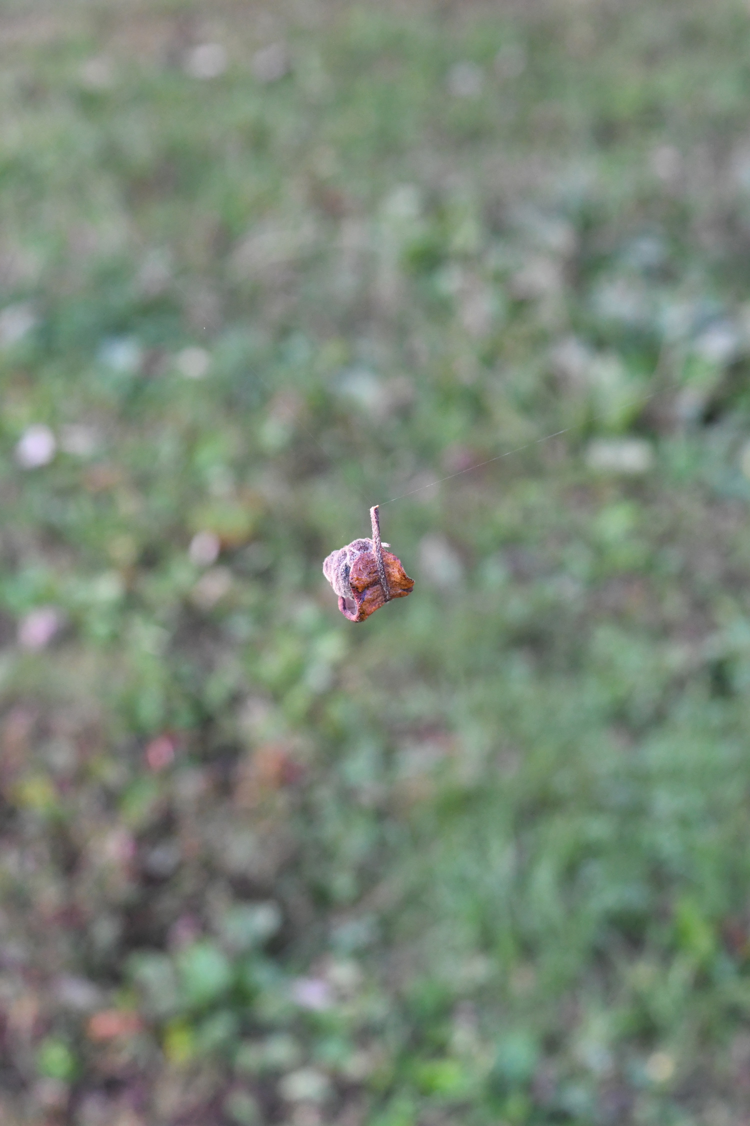 Leaf caught on web, Prospect Park