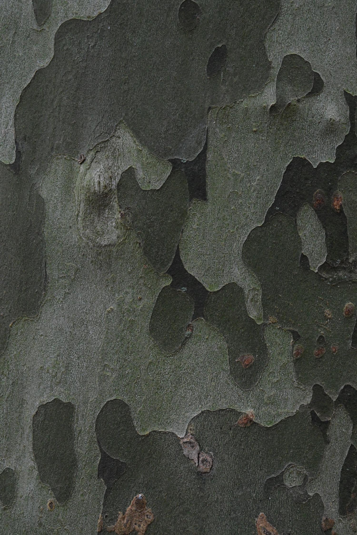 Sycamore bark, Prospect Park