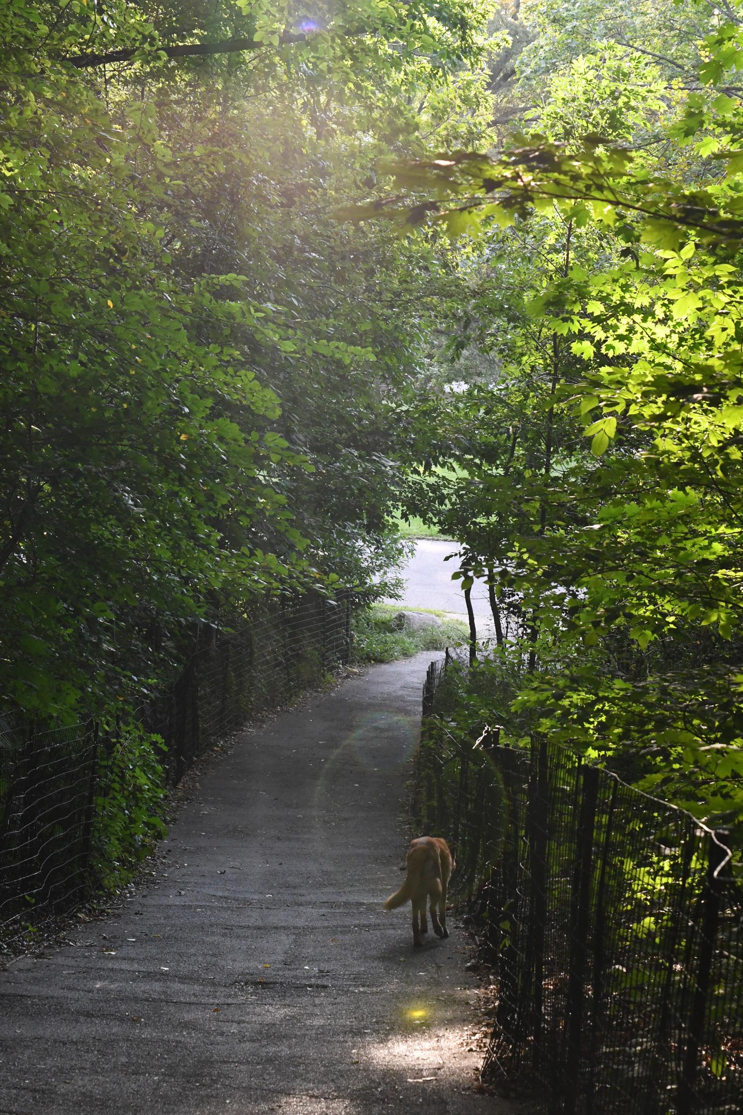 Toby on path, Prospect Park