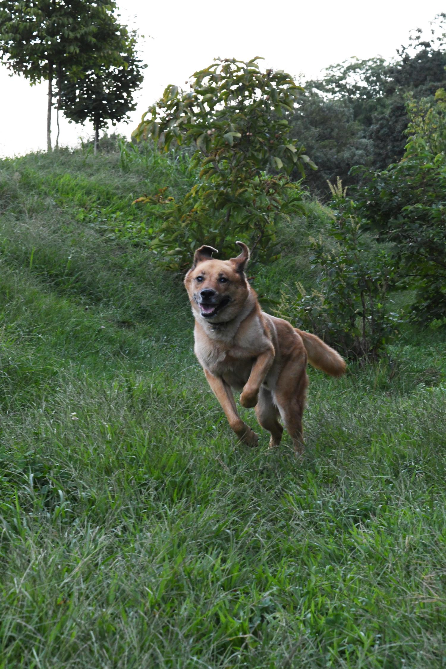 Toby running, Prospect Park