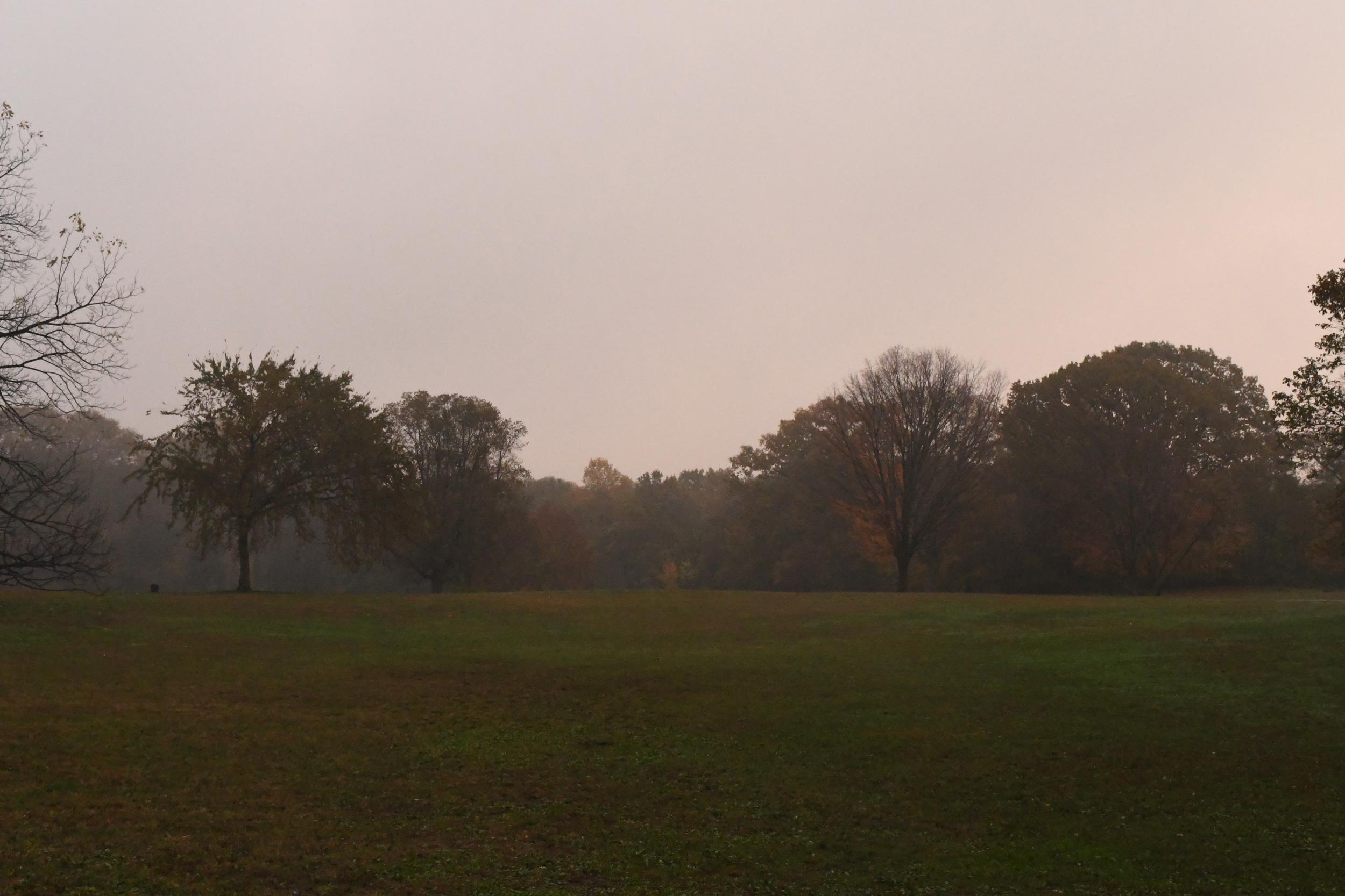 Dawn under mist, Prospect Park