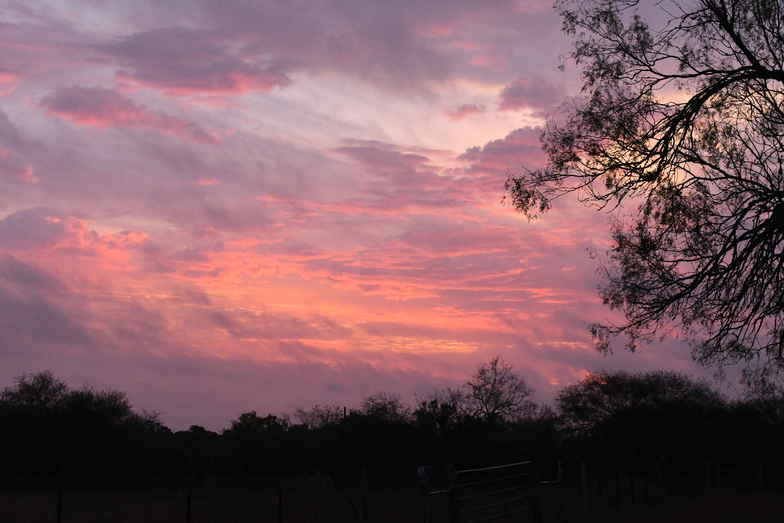 Dawn, Yorktown, TX