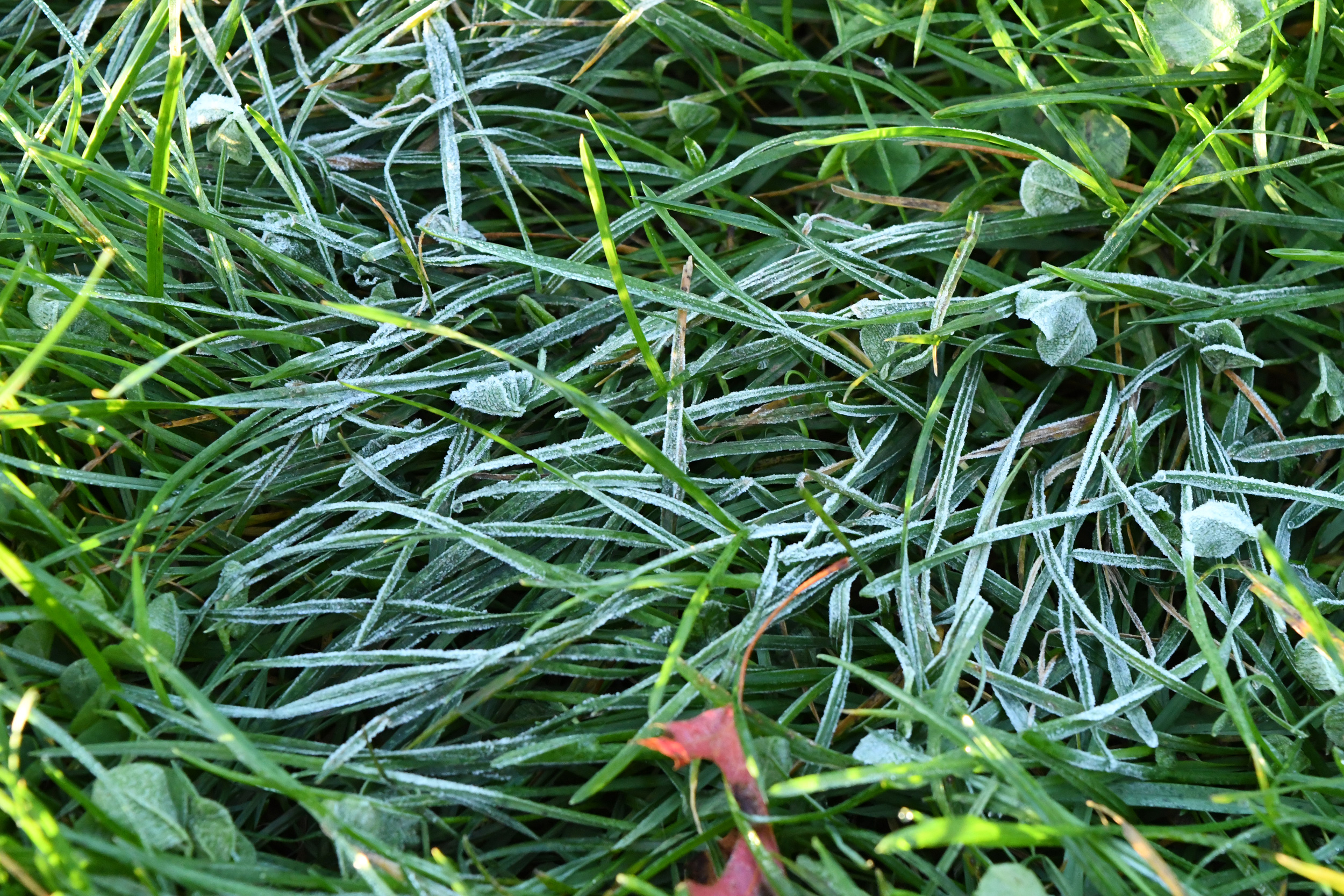First frost, Prospect Park