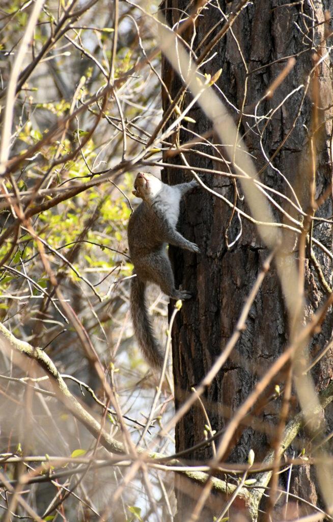 Squirrel, Prospect Park